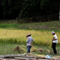 Endo Mizuki (curator), a marginal hamlet